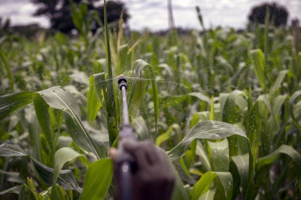 A hand holding a nozzle sprays pesticides onto a field.